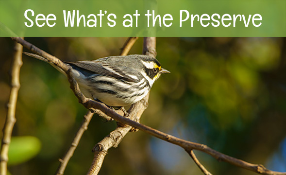 see what's at the Madrona Marsh preserve
