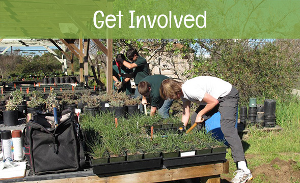 get involved - volunteer at Madrona Marsh