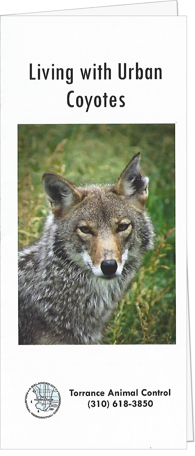 Urban Coyote Guide by Torrance Animal Control