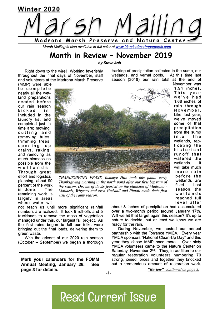 Winter 2020 Marsh Mailing Newsletter